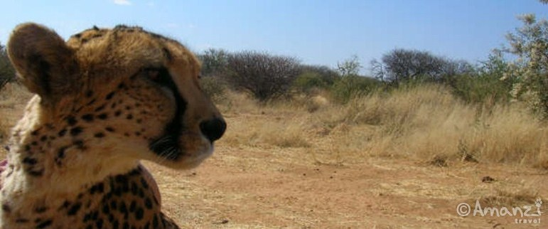 Windhoek, Namibia, Naankuse Wildlife Sanctuary