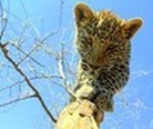 Gobabis, Namibia, Noahs Ark Wildlife Sanctuary