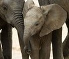 Desert Elephant Volunteer Project Namibia, Africa Volunteer Placements Wildlife Conservation Project