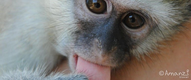 Tzaneen, South Africa, Primate Rehabilitation Volunteer