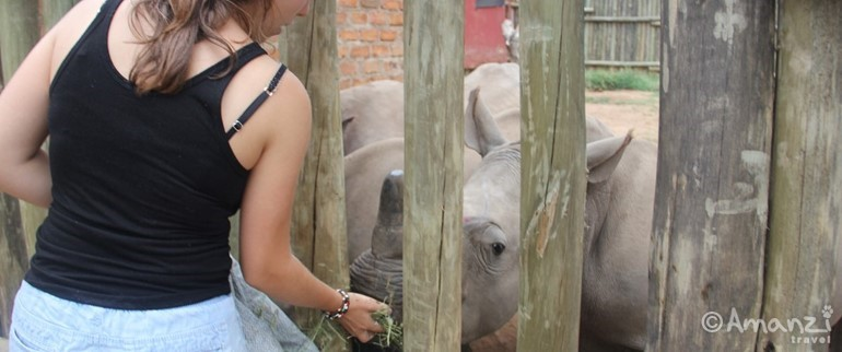 Near Nelspruit, South Africa, Volunteer Living with Orphaned Rhinos