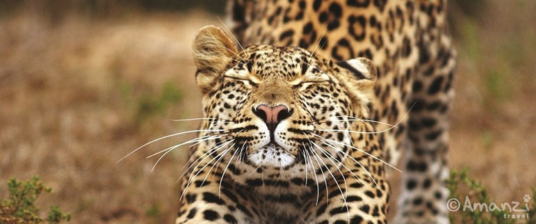 Eastern Cape, South Africa, Shamwari Conservation Volunteer