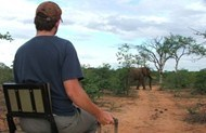 Botswana volunteer with wildlife