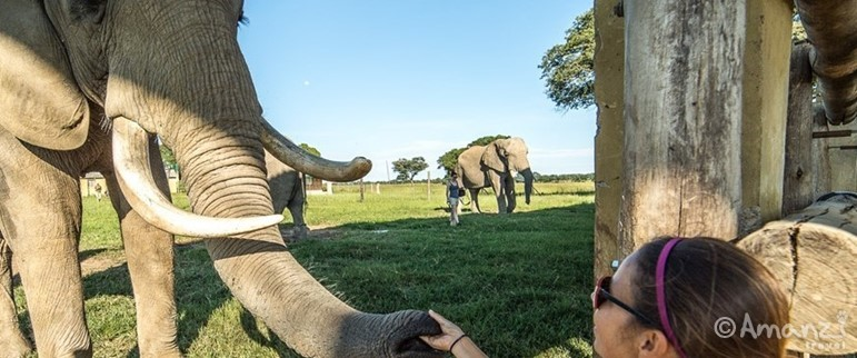 Imire Safari Ranch, Zimbabwe, Rhino and Elephant Sanctuary