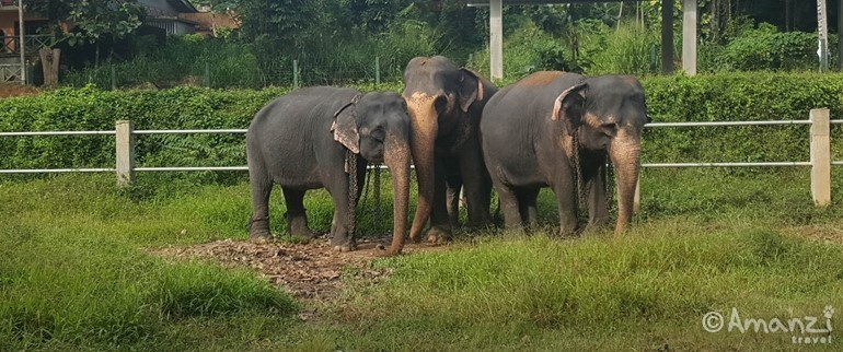 Kegalle, Sri Lanka, Sri Lanka Elephant Care and Conservation Project