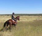 Near Windhoek, Namibia, Wildlife Sanctuary Equine Experience