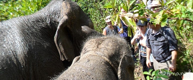 Chiang Mai, Chiang Mai Elephant Journey to Freedom