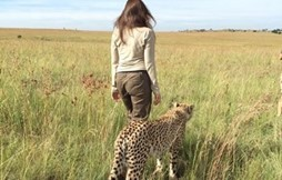 Launching - Living with Cheetahs