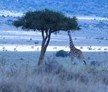 Game Reserves in South Africa and Botswana, Safari Guide Course - 28 Day