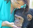 Chingola, Zambia, Chimpanzee and Wildlife Orphanage
