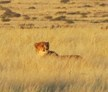 Namib Desert, Namibia, Big Cat Release and Tracking Volunteer
