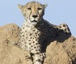 Okonjima, Namibia, Big Cat and Namibia Conservation Volunteer