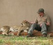 Parys, South Africa, Cheetah Rehabilitation Project
