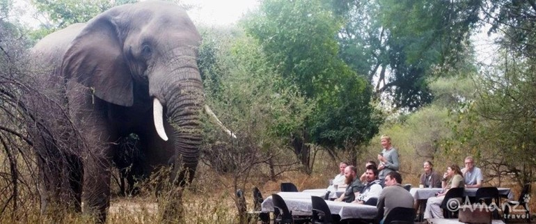 Game Reserves in South Africa, Botswana and Kenya, Safari Guide Course - 28 Day