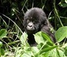 Kenya and Uganda, Gorillas and Game Parks 15 Day