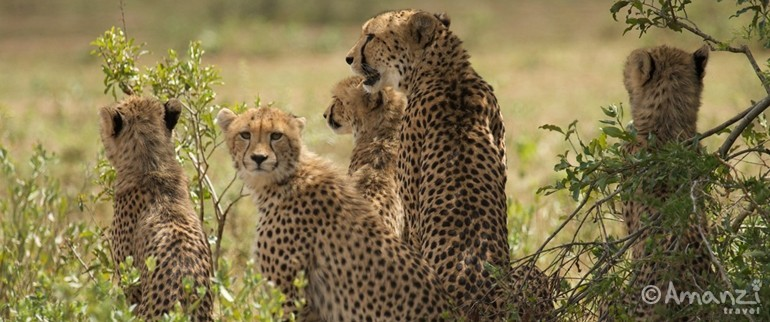 Kruger Conservation Area, South Africa , African Wildlife Photography and Conservation Project