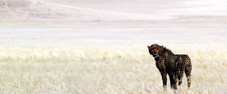 Namib and Kalahari Desert, Namibia, Naankuse Big Cat, Wild Dog and Elephant Conservation Project