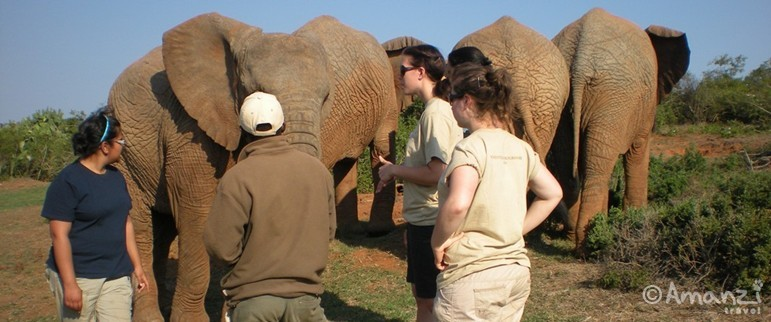 Eastern Cape, South Africa, Big 5 Reserve with Big Cat Conservation / Veterinary Internship