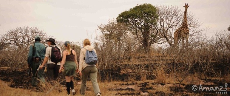 Zululand, South Africa, Zululand Wildlife Conservation Volunteer