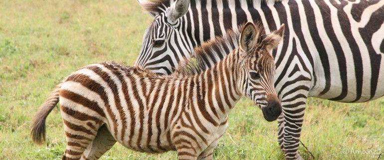 Game Reserves in South Africa and Botswana, Wildlife Photography Course - 7 Days