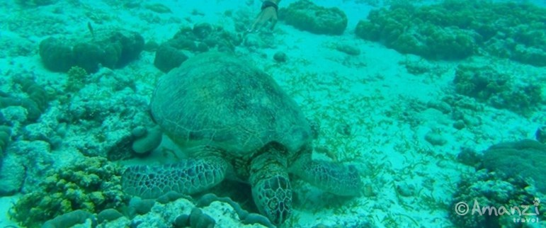 Pom Pom Island , Borneo Marine and Turtle Conservation