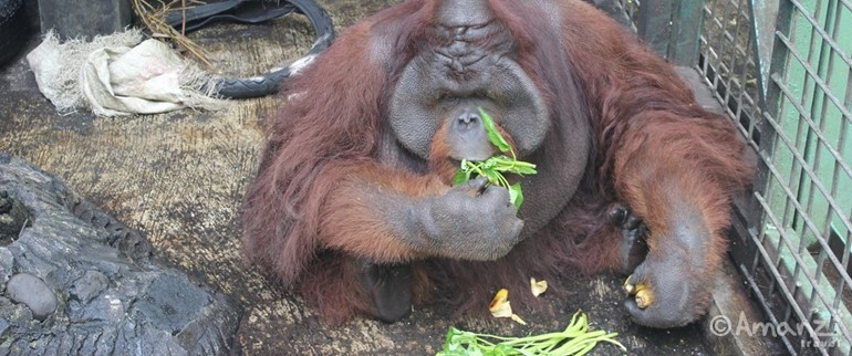 Java, Indonesia, Indonesia Orangutan and Wildlife Sanctuary