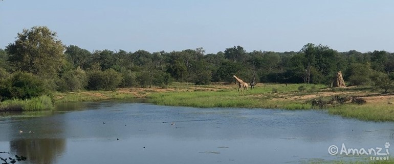 Greater Kruger Area , South Africa, Cheetah and Wildlife Conservation Experience