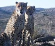 Near Port Elizabeth, Cheetah and Wildlife Experience