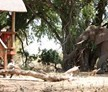 Kruger National Park, South Africa and Botswana, Trails Guide - 28 Day