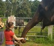 Sri Lanka Elephant Care and Conservation Project