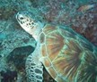 Borneo Marine and Turtle Conservation